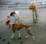 3dogsbeach