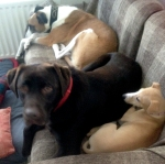 3dogssettee600