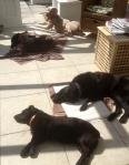 dogsinsidesleep800
